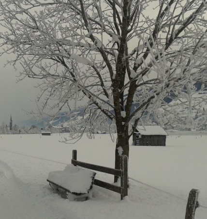Pinzgau winter